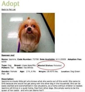 Adopt Jamine the dog mental status Retarded