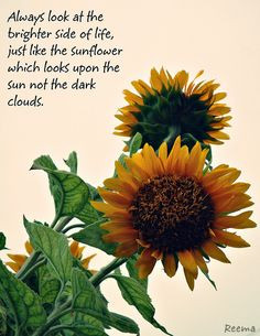 Sunflowers / positive quotes for inspiration