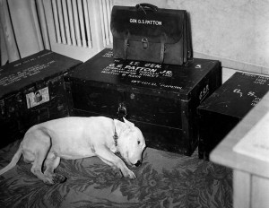 General George S. Patton's dog on the day of Patton's death on ...