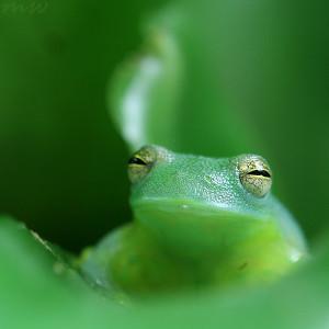 The Frog Prince Wedding Jayrie