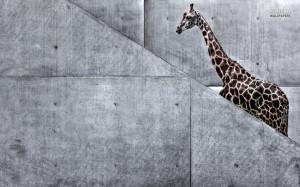 giraffe funny desktop wallpaper download stair climbing giraffe funny ...