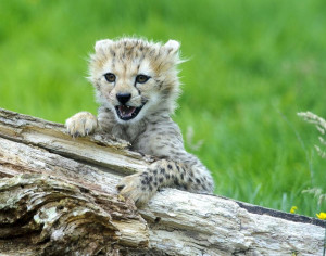Cutest baby animals in the Animal Kingdom
