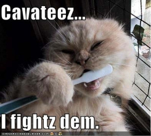 Even cat brush their teeth
