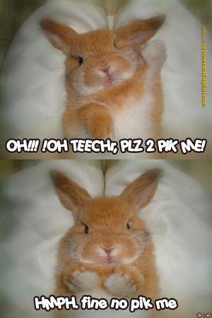 funny-bunny-raising-hand[1].jpg