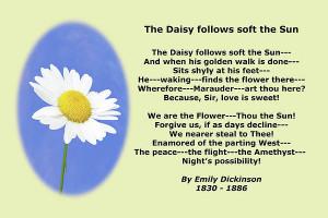 Daisy Poems http://fineartamerica.com/products/emily-dickinson-daisy ...