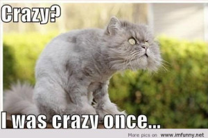 Crazy cat, OMG what a face!   Funny Pictures, Funny Quotes – Photos ...