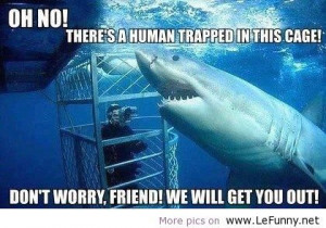lefunny.net funny jokes quotes animals pictures Favim.com 568828 large ...