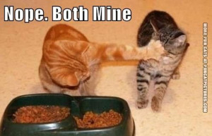 funny-cat-picture-both-mine