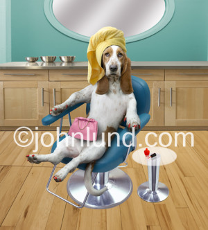 funny basset hound at the beauty parlour humrous dog pictures
