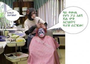 funny carton ethiopian pictures