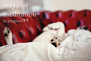 Home » Portfolio » Pampered Pups Postcards » Pampered Pups ...