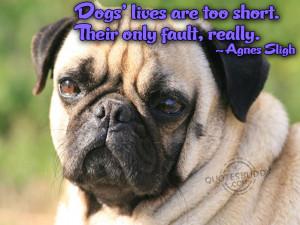 Funny Dog Sayings 8444 Hd Wallpapers