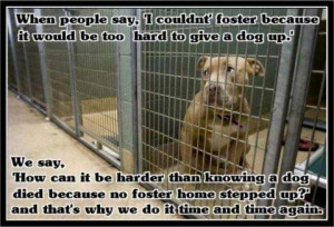 fostering does require dedication on your part but if you are like our ...