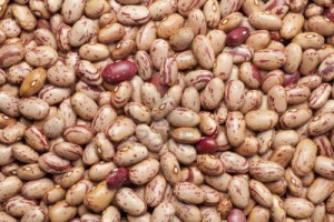 The Pinto Bean Originates From Central Mexico Where Means picture