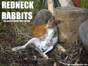 redneck rabbit is a bad rabbit!