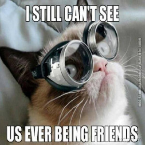 funny cat pics i still cant see us ever being friends grumpy