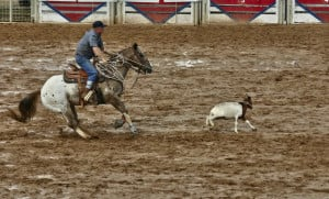 Go Back > Gallery For > Calf Roping Quotes