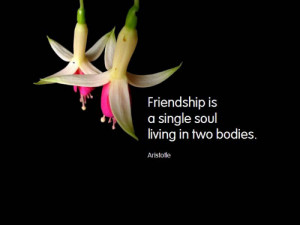 soul friendship is a single soul living with two bodies