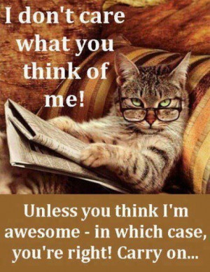 think about me funny quotes memes quote cat meme lol funny quote funny ...