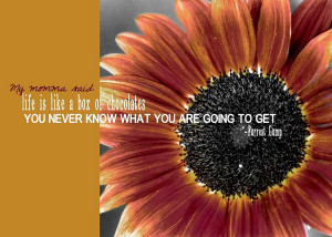 Sunflower Quote Photograph
