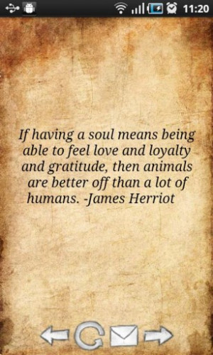 ... Then Animals Are Better Off Than A Lot Of Humans - Animal Quote