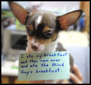 Funny Dog Shaming Meme Picture Image - I ate my breakfast and then ran ...
