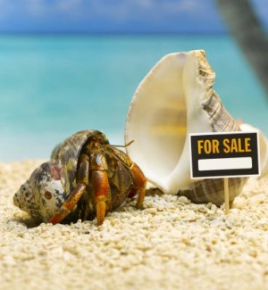 hermit crab shells. Sea hermit crab no shell