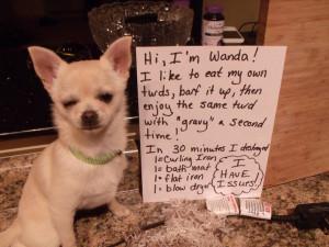 Cousins Dog Shaming Quotes And Fun Things