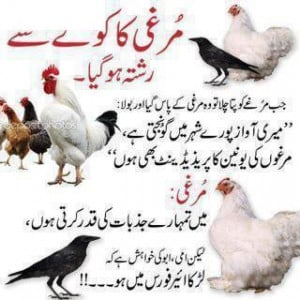 Murgi Ka Rishta – Funny Urdu Jokes