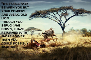 ... quotes funny typography zebras lions Entertainment Funny HD Wallpaper