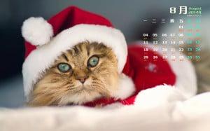 2014年8月日历小猫搞笑图电脑桌面壁纸大全