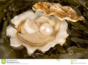 Large white pearl inside an open oyster shell.