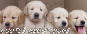 Dogs Quotes. Page with the best quotes about dogs.
