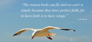 Flying Bird Quotes Why birds can fly :)