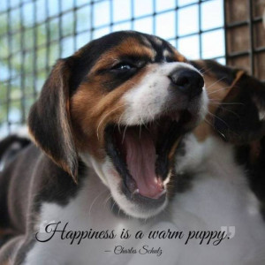 Great Quotes about Pets — After reading these quotes you will love ...