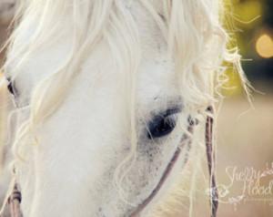 Horse Quotes About Trust White percheron mare horse
