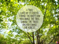 ... you change the forest. #wisdom #quote #hoyumpa #livelittlelovebig More