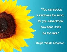 sunflower quote more sunflowers quotes sunflowers classroom quotes 3 ...