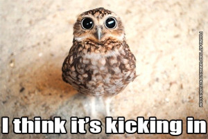 An owl on drugs