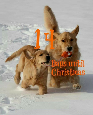 Only 14 days until #Christmas...