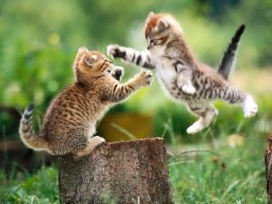 Cats Fight fun Photos