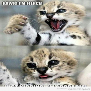 ... cute cat pictures with quotes about funny things funny cute kittens