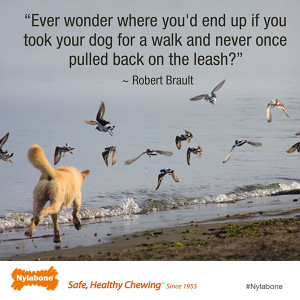 ... ? ~ Robert Brault Courtesy of www.nylabone.com #dogs #pets #quotes
