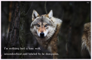 ... , lobo, wallpaper, lone wolf, snow, mythical, wolf, the pack, pack