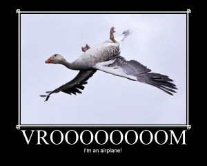 funny goose as good idea if favorite funny a weird animal