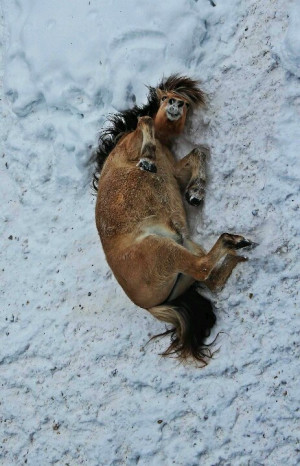 Lol horse playing in the snow