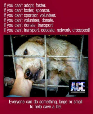 Adopt Shelter Dog Quotes Adopt foster rescue a shelter