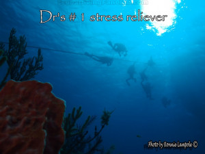 ... Diving with the Dolphins - Resort Coarse and Certified Scuba Divers
