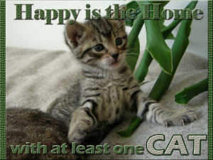 Happy is the home with at least one cat.