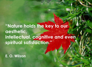 Nature holds the key to our aesthetic, intellectual, cognitive and ...